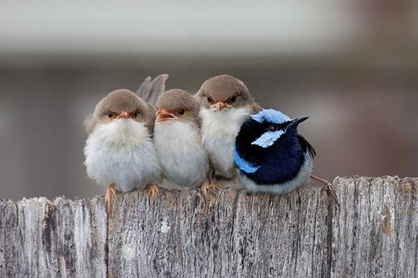 4_birds_1_different