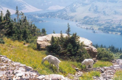 18A_015-MtnGoatsGrazing-2-WithHiddenLake-pe